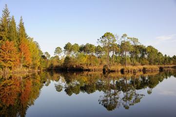 Hostens, forêt en automne 2