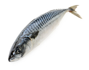 mackerel fish on wooden plate isolated