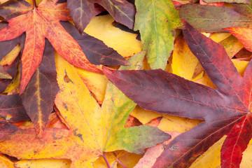 autmn leaves