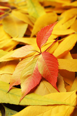 Beautiful autumn leaves background