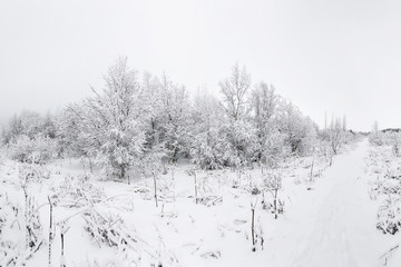 Beautiful snowsacpe