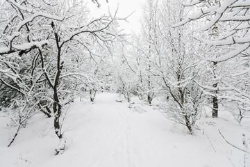 Beautiful snowsacpe