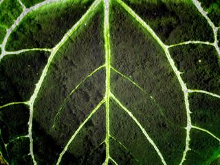 leaf texture  leaves background