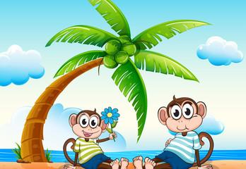 Monkeys and beach