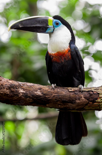 Aluminium Toekan beautiful blue green red white black toucan bird