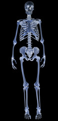 blue human skeleton on black illustration