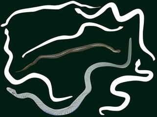 seven snakes on dark background