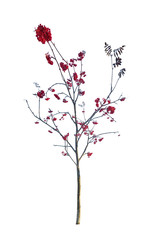 small bare rowan tree with berries