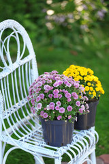 Yellow and lilac flowers in pots
