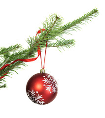 Red bauble on conifer branch isolated
