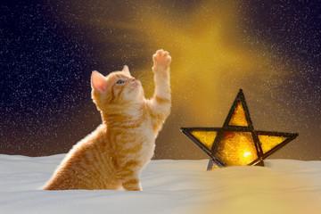 Stille Nacht, Katze mit leuchtendem Stern bei Nacht