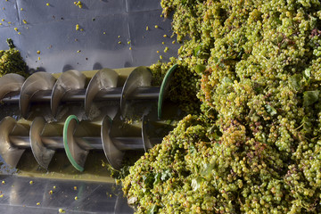 pressure grapes at the winery