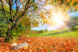 Autumn, fall landscape with a tree. Sun shining