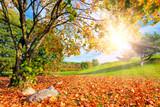 Autumn, fall landscape with a tree. Sun shining