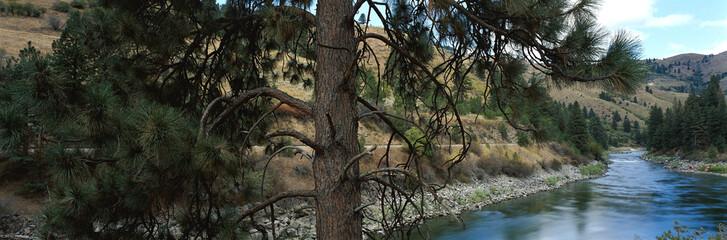 панорама река и сосна