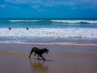 Hund beim Strandspaziergang am Meer