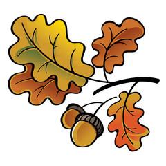 Oak leaves and acorns - autumn nature