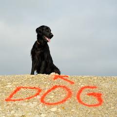 Rasse Hund Retriever und Aufschrift Dog