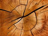 Jahresringe und Maserung eines Baumstamms - 72408651