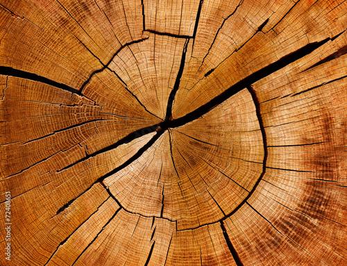 Leinwanddruck Bild Jahresringe und Maserung eines Baumstamms