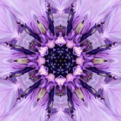 Purple Mandala Flower Center. Concentric Kaleidoscope Design