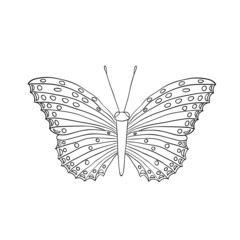 cartoon butterfly on white background