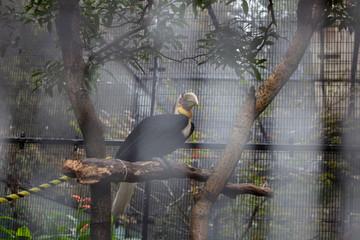 Riesiger Vogel