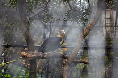 Tuinposter Toekan Riesiger Vogel