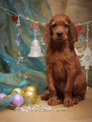 Puppy and Christmas decorations. Vertical.