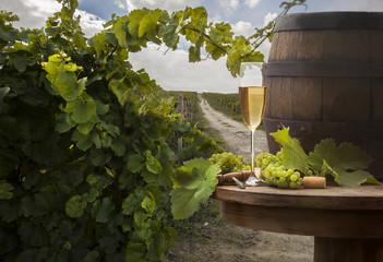 white wine on vineyard background