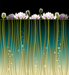 Illustration of water lily with water and bubbles