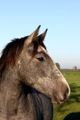 horse portrait on the sky background.