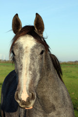 horse portrait on the sky background