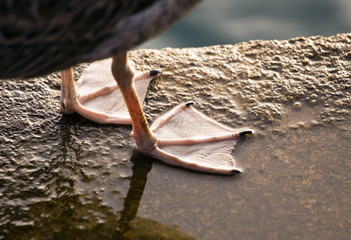 Close up photo of the feet of a gull
