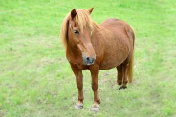 Altes Pferd, q.