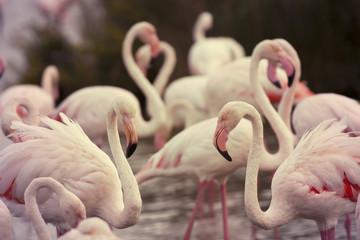 Beautiful pink flamingos
