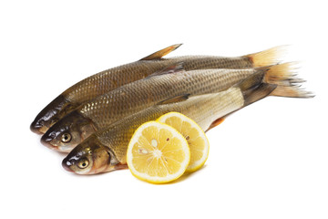 fresh fish on white background