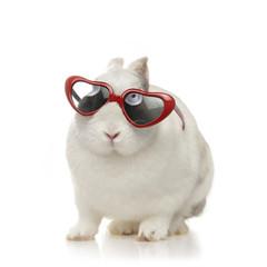 lapin nain blanc avec lunettes
