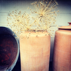 Decorative allium plants in clay vase