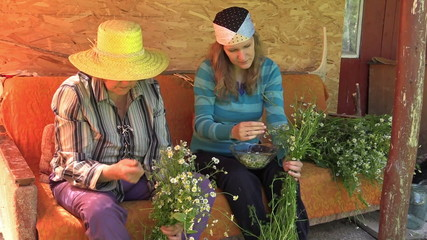 Senior grandmother and young woman pick herb chamomile blooms