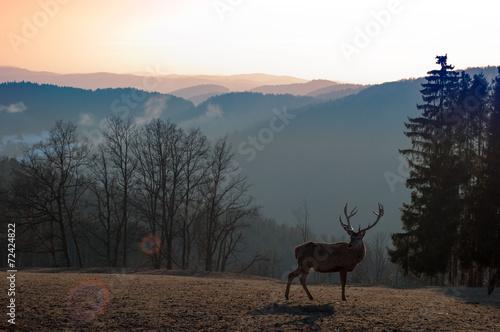 Foto op Aluminium Hert Deer