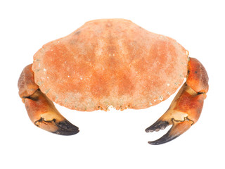 Bolied orange color crab  with claws isolated on white backgroun