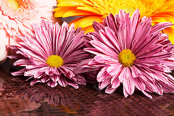 Four gerberas with water drops
