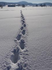path winter landscape