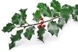 ramo di agrifoglio con bacche rosse