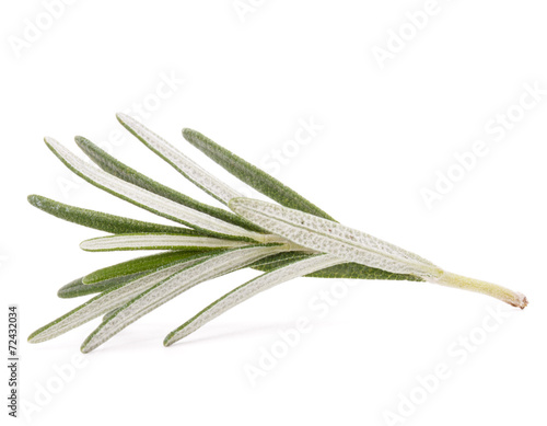 Tuinposter Olijfboom rosemary herb spice leaves isolated on white background cutout