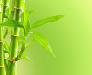 Bamboo background with copy space