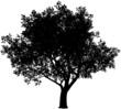 Tree silhouette - 72437410