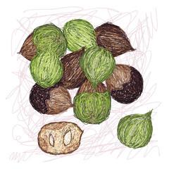 island walnut