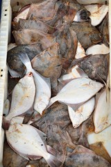 Frisch gefangene Meeresfische